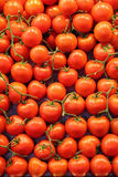 Tomato background Stock Photography