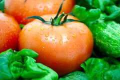 Tomato on a background of green Stock Image