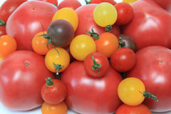 Tomato background Royalty Free Stock Photos