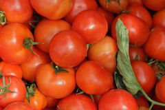 Tomato Background. Red Tomatoes as an Agricultural Background Stock Photo