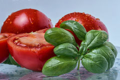 Tomato and Basil. Fresh adn wet Tomatoes and Basil Stock Photos