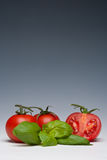 Tomato and Basil herb. On a plain background Stock Photo