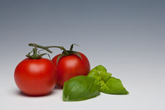 Tomato and Basil herb. On a plain background Royalty Free Stock Photo