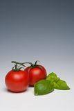 Tomato and Basil herb. On a plain background Royalty Free Stock Images