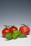 Tomato and Basil herb. On a plain background Royalty Free Stock Photography