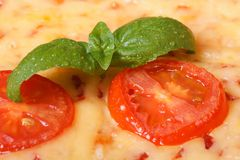 Tomato and basil macro on a margarita pizza Royalty Free Stock Photos