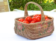 Tomato Basket 1 Stock Photo