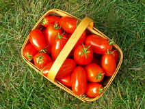 Tomato basket - aerial. Aerial view of tomato-picking basket royalty free stock photo