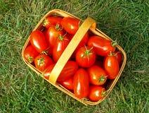 Tomato basket - aerial. Aerial view of tomato-picking basket Royalty Free Stock Photo