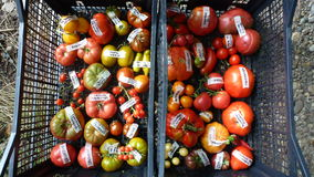 Tomato in basket 2. Tomatoes, cucumbers and chili on roks Royalty Free Stock Images