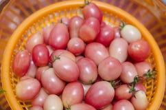 Tomato in basket Royalty Free Stock Image