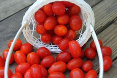 Tomato. On basket with wooden table Stock Photos