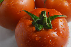 Tomato. Beautiful red tomatoes hanging droplets looks very appetite Royalty Free Stock Images