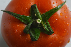 Tomato. Beautiful red tomatoes hanging droplets looks very appetite Royalty Free Stock Photo