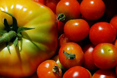 Tomato, big and small Royalty Free Stock Photography