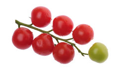 Tomato branch Stock Image
