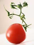 Tomato with branch. On light background Stock Image