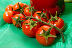 Tomato branch Stock Photography