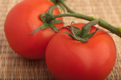 Tomato on a branch Royalty Free Stock Photos