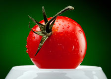 Tomato branch with water drops. On dark green background Stock Photos