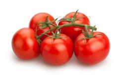 Tomato branch Royalty Free Stock Photo