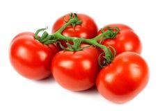 Tomato branch Stock Photo