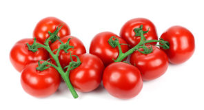 Tomato branch! Stock Images