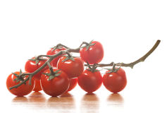 Tomato branches  on white background Royalty Free Stock Image