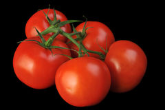 Tomato bunch. Fresh juicy red tomatoes on green bunch Royalty Free Stock Image