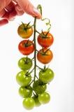 Tomato bunch Royalty Free Stock Photos