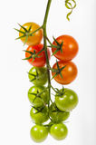 Tomato bunch Royalty Free Stock Image