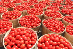 Tomato Bushels 1 Royalty Free Stock Images