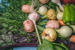 Tomato, cabbage, onion, potato, pepper, garlic, carrot and beetroot. Vegetables in a basket on a blue background. Copy space. Healthy food, agriculture royalty free stock photo