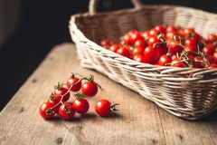 Tomato cherry in basket Tomato in hand South Asia. Nature light stock photography