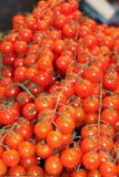 Tomato cherry, Stock Photo