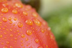 Tomato close up. With water drops Royalty Free Stock Photo