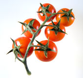 Tomato cluster serie 3. A set of cherry italian red tomatoes Royalty Free Stock Photography