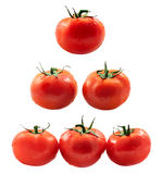Tomato collage Stock Image
