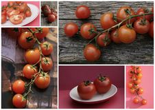 Tomato collage Royalty Free Stock Photos