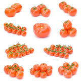 Tomato collection Stock Photography