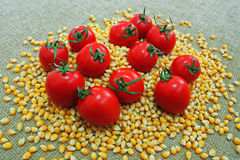 Tomato on Corns Stock Images