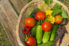 Tomato, cucumber. vegetables  in basket Stock Image