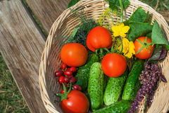 Tomato, cucumber. vegetables  in basket Stock Images