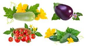 Tomato, cucumber, zucchini, eggplant isolated on white Stock Images