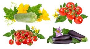 Tomato, cucumber, zucchini, eggplant isolated on white Stock Photos