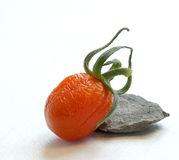 Tomato with curl skin. Rock and tomato with old skin Stock Images
