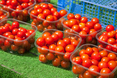 Tomato Display Royalty Free Stock Photography