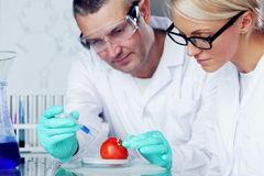 Tomato DNA. Manand woman try to change tomato DNA stock images