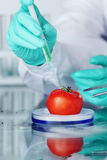 Tomato DNA change Royalty Free Stock Photos