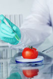 Tomato DNA change. Microbiology experiment Stock Photos